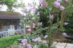 The Garden Room treatment summer house